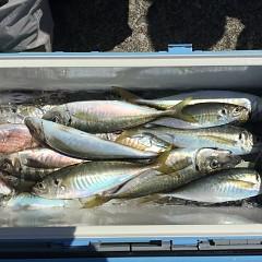 3月31日(日)午前便・アジ釣りの写真その8
