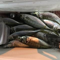 4月 21日(日) 午後便・アジ釣りの写真その5