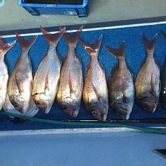 5月 13日(月) 午後便・ウタセ真鯛の写真その3