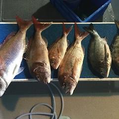 5月 13日(月) 午後便・ウタセ真鯛の写真その4