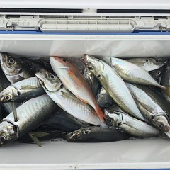 5月 29日(水) 8時出船アジ釣りの写真その6