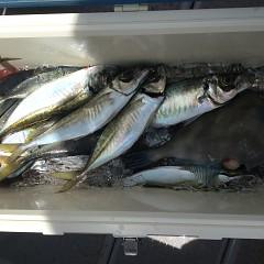 5月 30日(木) 午前便・アジ釣り 午後便・ウタセ真鯛の写真その5