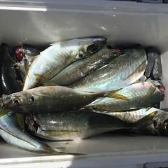 5月 30日(木) 午前便・アジ釣り 午後便・ウタセ真鯛の写真その6