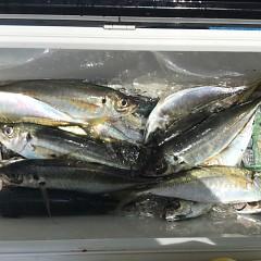 5月 30日(木) 午前便・アジ釣り 午後便・ウタセ真鯛の写真その8