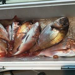 5月 30日(木) 午前便・アジ釣り 午後便・ウタセ真鯛の写真その9