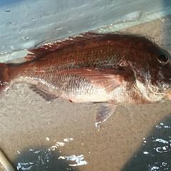 5月 30日(木) 午前便・アジ釣り 午後便・ウタセ真鯛の写真その11