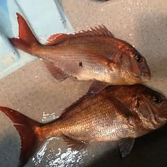 5月 30日(木) 午前便・アジ釣り 午後便・ウタセ真鯛の写真その12