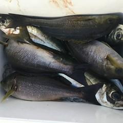 6月 3日(月) 午前・午後・アジ イサキ釣りの写真その1