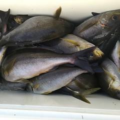 6月 10日(月) 午後便・イサキ釣りの写真その1