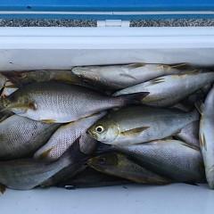 6月12日(水)午後便・イサキ釣りの写真その1