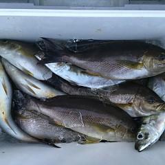 6月12日(水)午後便・イサキ釣りの写真その2