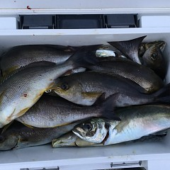 6月12日(水)午後便・イサキ釣りの写真その3