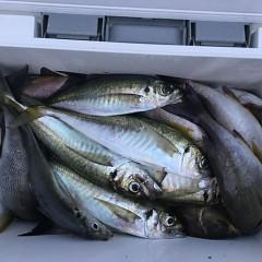 6月12日(水)午後便・イサキ釣りの写真その4