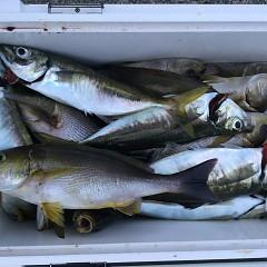 6月12日(水)午後便・イサキ釣りの写真その5