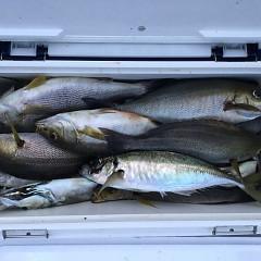 6月12日(水)午後便・イサキ釣りの写真その6