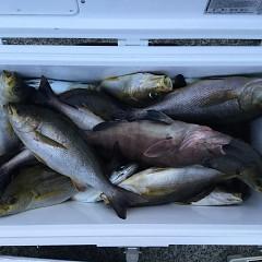 6月12日(水)午後便・イサキ釣りの写真その7