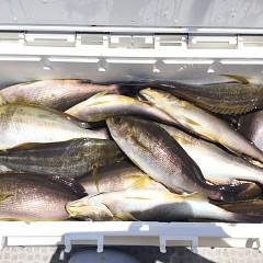 6月 13日(木) 午前便・イサキ釣りの写真その7