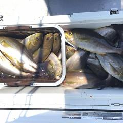 6月 13日(木) 午前便・イサキ釣りの写真その10