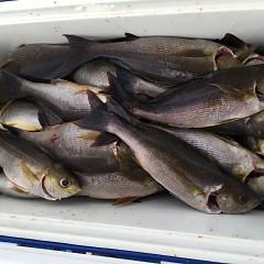 6月13日(木)午後便・イサキ釣りの写真その5
