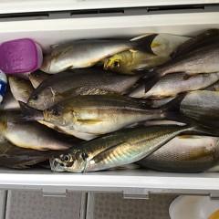 6月13日(木)午後便・イサキ釣りの写真その6