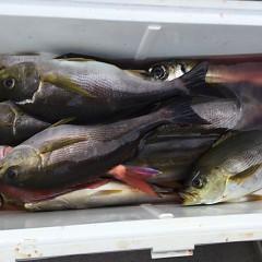 6月13日(木)午後便・イサキ釣りの写真その10