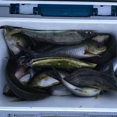 6月24日(月)午前・午後便・イサキ釣りの写真その10