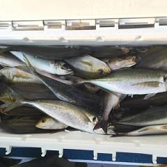6月 28日(金) 午前・午後・イサキ釣りの写真その3