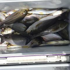 6月 28日(金) 午前・午後・イサキ釣りの写真その6