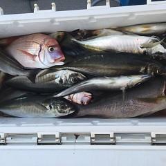 6月 28日(金) 午前・午後・イサキ釣りの写真その10