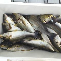 6月29日(土)午前・午後便・イサキ釣りの写真その8