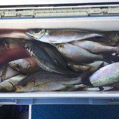 7月 10日(水) 午前・午後・イサキ釣りの写真その4