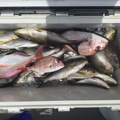 7月 10日(水) 午前・午後・イサキ釣りの写真その5
