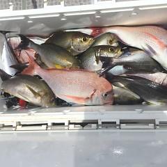 7月 10日(水) 午前・午後・イサキ釣りの写真その6