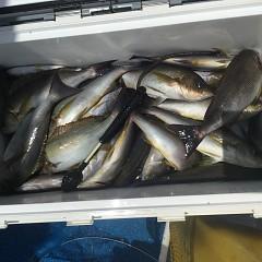 7月 10日(水) 午前・午後・イサキ釣りの写真その8