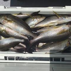 7月 10日(水) 午前・午後・イサキ釣りの写真その10