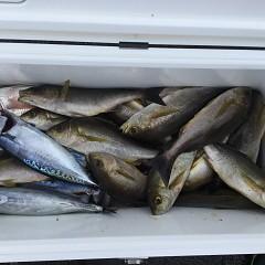 7月 15日(月) 午前・午後・イサキ釣りの写真その1