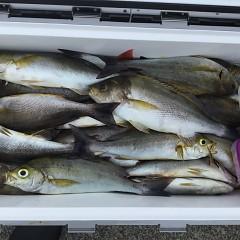 7月18日(木)8時出船・イサキ釣りの写真その1