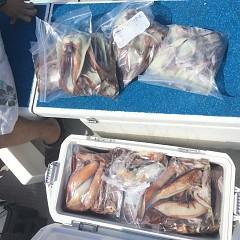 7月 23日(火) 1日便・スルメイカ釣りの写真その6