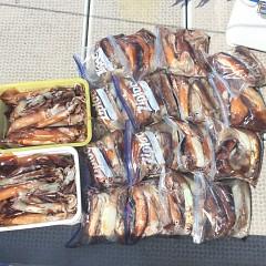 7月 23日(火) 1日便・スルメイカ釣りの写真その10