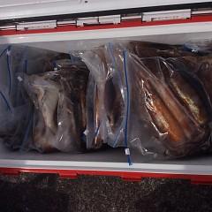 7月22日(月)スルメイカ釣りの写真その2