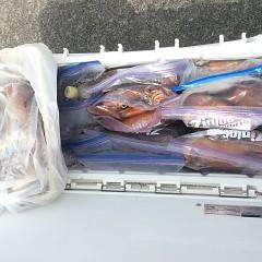7月22日(月)スルメイカ釣りの写真その6