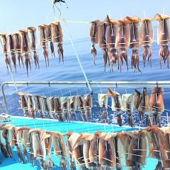 7月 24日(水) 1日便・スルメイカ釣りの写真その5
