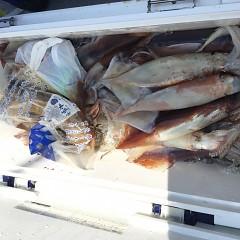 7月 24日(水) 1日便・スルメイカ釣りの写真その7