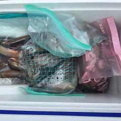 7月 26日(金) 1日便・スルメイカ釣りの写真その2