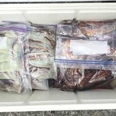 7月 26日(金) 1日便・スルメイカ釣りの写真その3