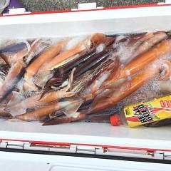 7月 26日(金) 1日便・スルメイカ釣りの写真その4