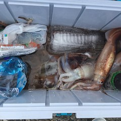 7月 26日(金) 1日便・スルメイカ釣りの写真その5