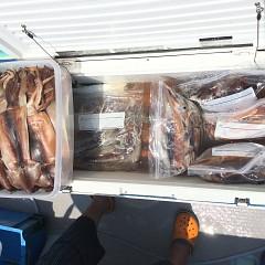 7月 28日(日) 1日便・スルメイカ釣りの写真その9