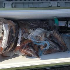 7月 31日(水) 1日便スルメイカ釣りの写真その6