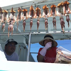 8月 4日(日) 1日便・スルメイカ釣りの写真その3